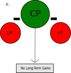 Conjugate Periodization 1.png
