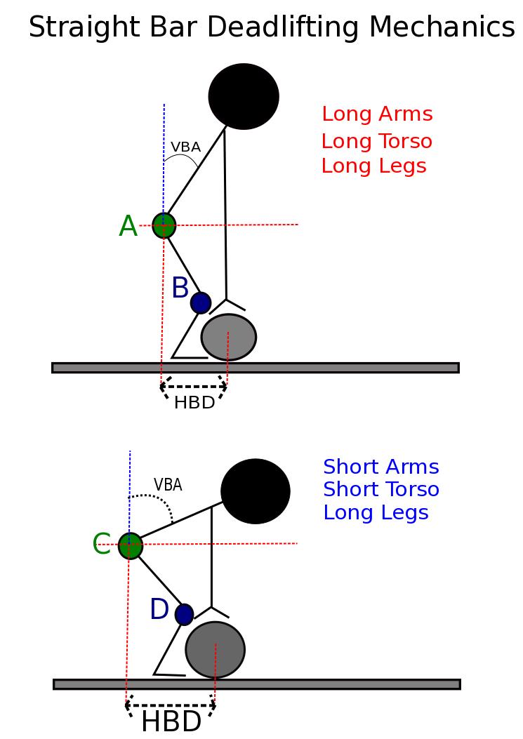 Deadlift Muscles Diagram The Trap Bar Deadlift:...