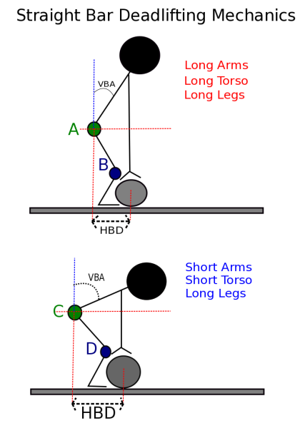 Deadlift diagram 1.png