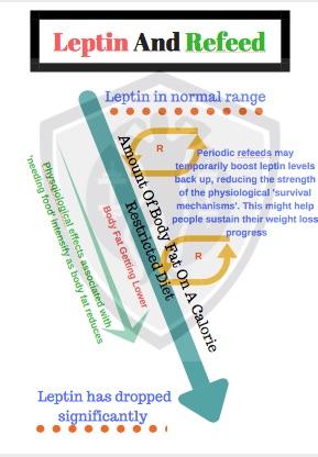 A4_–_Leptin___It_s_Effects