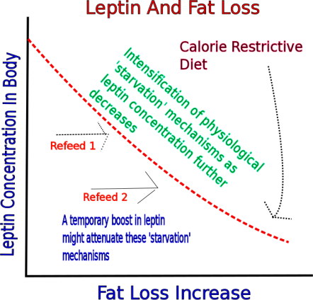 leptin.png