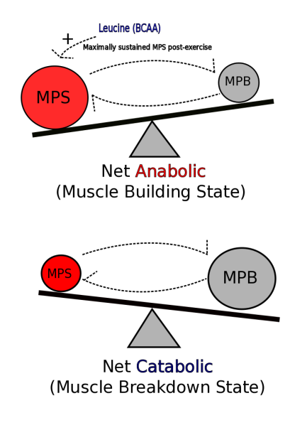 Protein translation.png